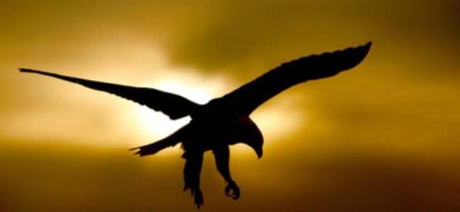aguila Aprende a renovar tus energías como un águila