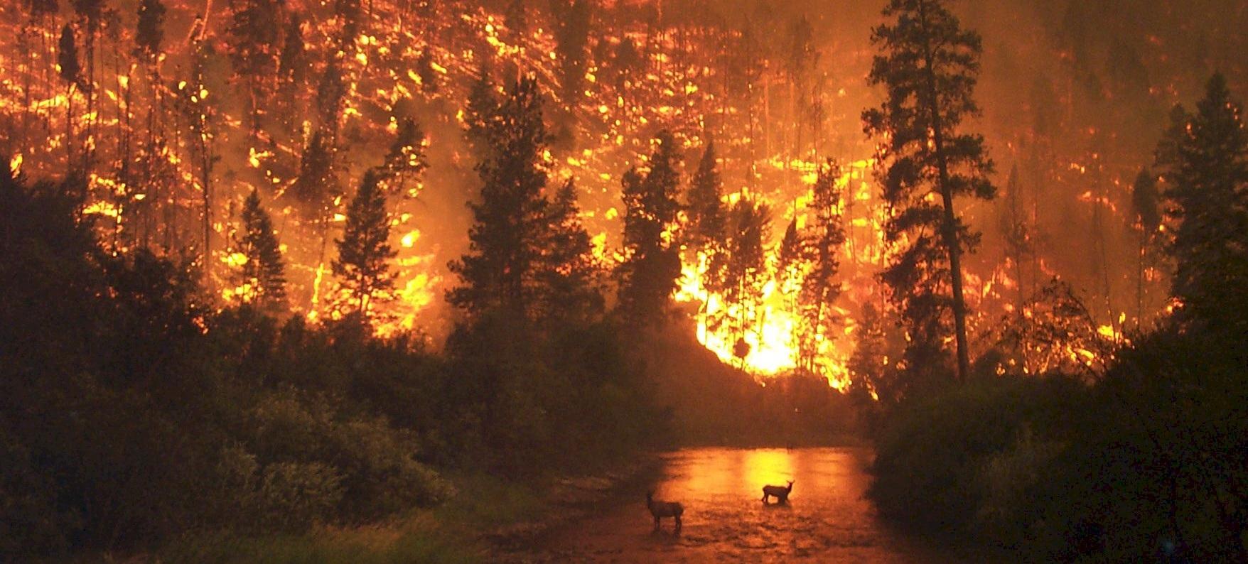 espana en llamas un pais en la ruina tambien ecologica