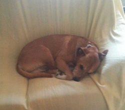 Excalibur-perro-Teresa-sacrificado-ebola_MDSVID20141007_0200_17