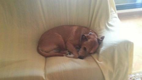Excalibur, el perro sacrificado por el gobierno español